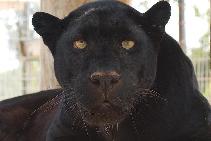 Turpentine Creek Wildlife Refuge Pt 2_4314197069534546909
