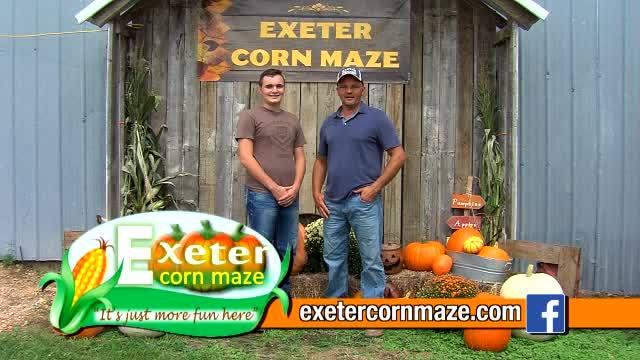 Exeter Corn Maze