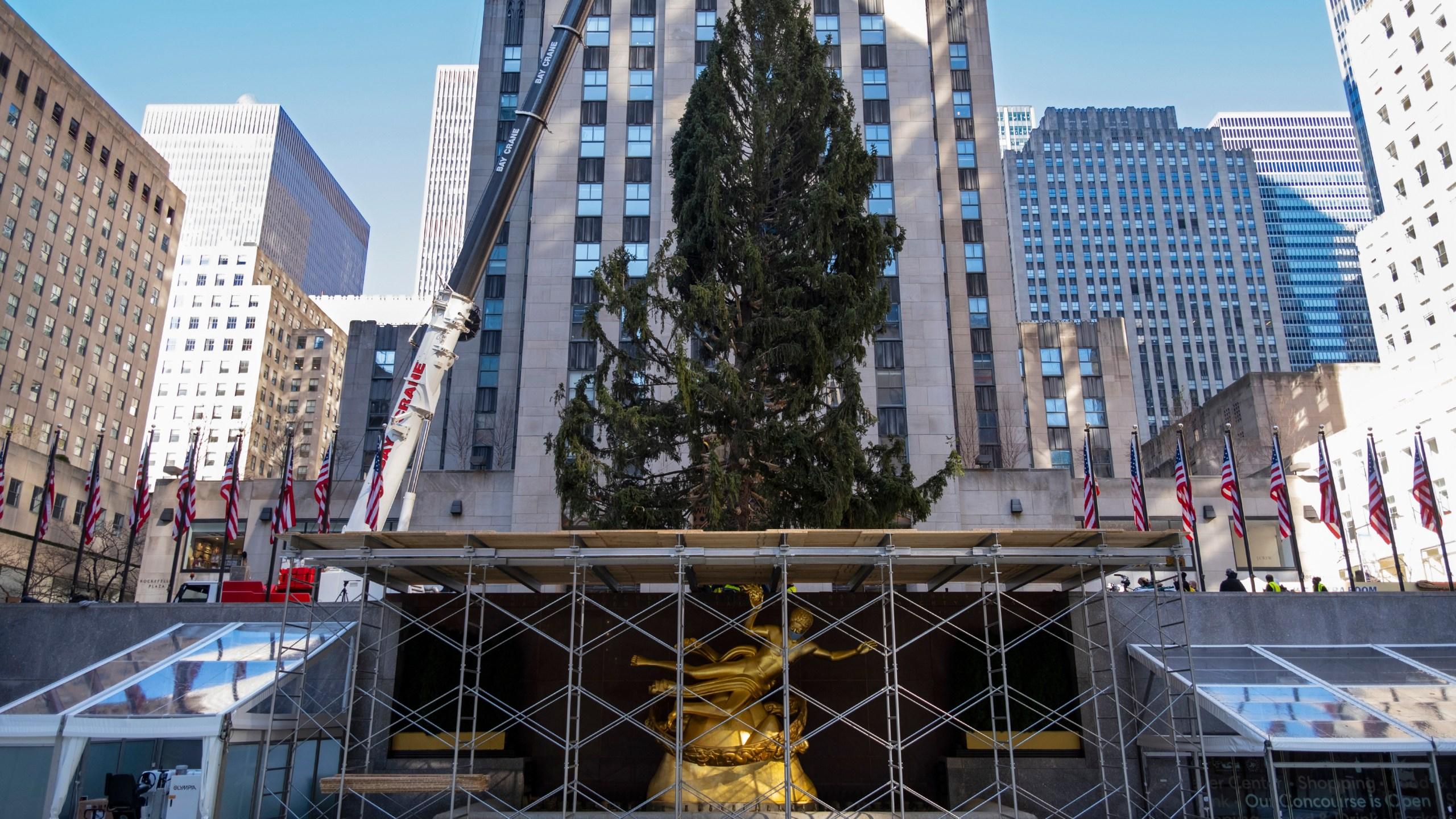Rockefeller Christmas Tree 2020 December 8 2020 Went Dark Rockefeller Center Christmas tree goes up; lighting Dec. 2 – KSNF